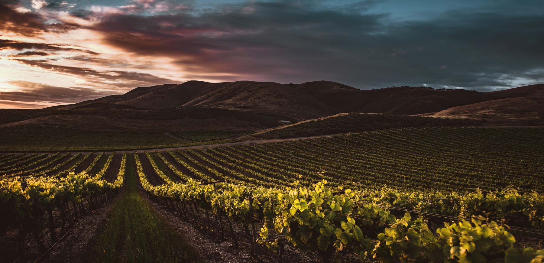 vineyard-header