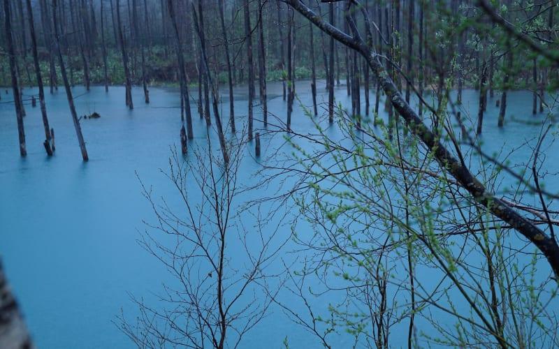 blue-pond-4202794_1920