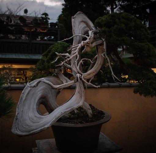 shiho-kambara-X9b1OP4MPSQ-unsplash